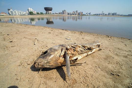 Если ситуация собмелением повторится, тоэто негативно скажется нанересте рыбы, и, соответственно, набиологическом разнообразии водоемов, убежден представитель федерации рыболовов-любителей