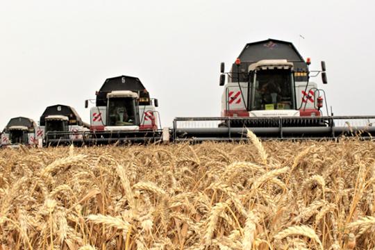«Агросила» вэтом году сильно изменяет производственную программу— планируется производить больше пшеницы 3 и4 класса, которая подходит для хлебопекарной промышленности