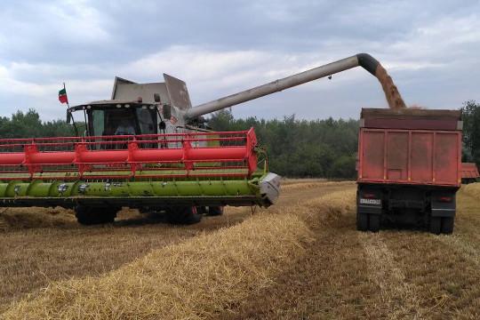 «Хлебом» раньше называли зерно, которое выращивают в поле. «Чёрный» означает цельнозерновой»