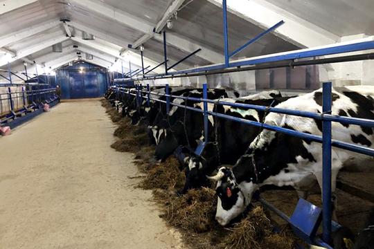 «Мыперерабатываем молоко только сосвоей фермы истрого следим заего качеством»