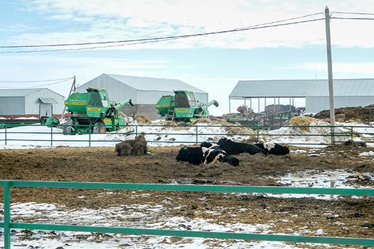 Публично озвученная претензия мензелинцев к «Камскому бекону» состоит в том, что компания разрушает оставшиеся еще со времен СССР животноводческие хозяйства, якобы лишая сельчан работы и кормов для домашнего скота