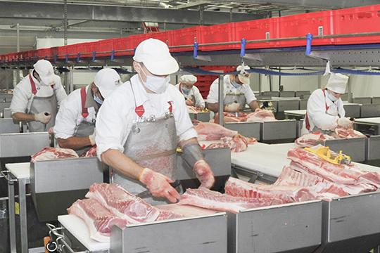 Несмотря на то, что значительная часть населения Татарстана — мусульмане, свиноводство в республике также развито.Лидером направления является челнинское ООО «Камский бекон», где в 2019 году произвели 54,6 тыс тонн мяса