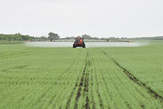 Коронавирусная инфекция также не оказала особого влияния на полевые работы — единичные случаи в отдельных хозяйствах были вовремя купированы и, к счастью, не привели к параличу всей отрасли