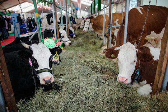 «С 1 сентября 2021 года чипизация животных станет обязательной, по крайней мере, пока готовится такой законопроект на федеральном уровне»