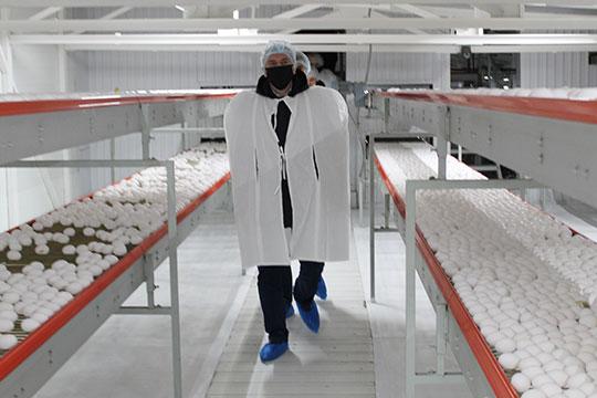 «Больше всего мы переживали за промышленные предприятия — птицефабрики, свинокомплексы, хлебозавод»