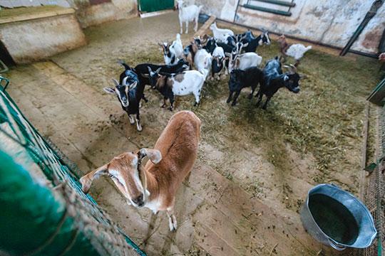 «Что касается новой части зоопарка, то там все условия содержания предусмотрены: система вентиляции, есть теньки [для животных] — все это предусмотрено»