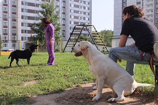 Отсутствие регистрации ограничивает чиновников всоздании площадок для выгула домашних животных. Наличие регистрации является одним изкритериев посозданию таких площадок водворах