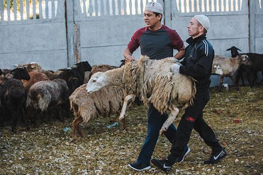 Бараны по девять тысяч, доля в корове — 13 тысяч рублей. Сюда входит резка, обработка, доставка