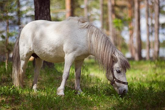 После продажи, делится Власьева, новый хозяин присылал ейвидео здоровой бегающейАнапы.Амать пони, говорит собеседница, досих пор ютится втесном углу