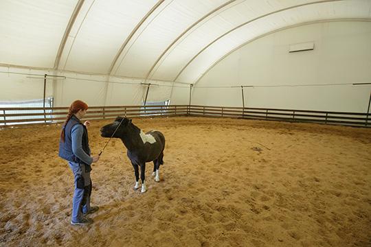 Жалобы были нанехватку лошадей ичастые нецензурные выражения отНасыбуллиной вадрес детей.Родители сетуют инатравмоопасную инервную обстановку вманеже