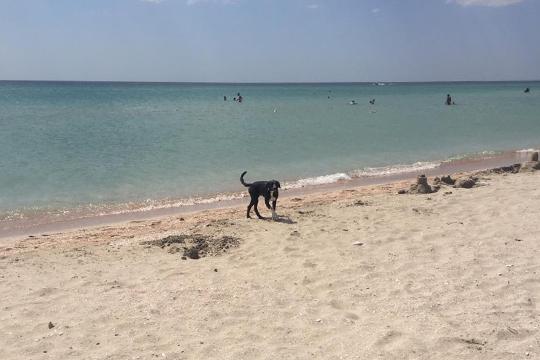 Пляжи в Поповке дикие, но невероятно красивые. Сюда приезжают даже местные крымчане, живущие недалеко. Здесь песчаный белый песок и невероятное, изумительное море — чистое, бирюзовое, цветом похожее на Средиземное, плавают рыбки, медузы