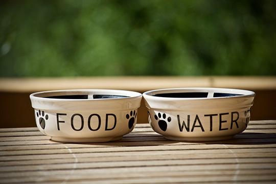 Уживотных заложено вподкорке, что можно пить издвух источников: большое «зеркало»— речка, большая лужа, ижурчащая вода, стекающая сверху— ручей, водопад ит.д