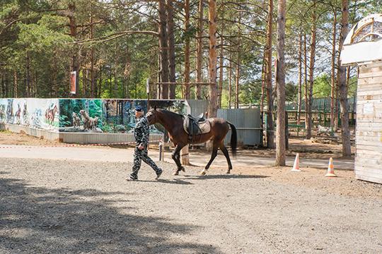 На территории конноспортивной школы, расположенной на площади в 19 гектаров, имелись пустующие корпуса, а у школы уже к тому моменту были специалисты, способные обеспечить уход за животными