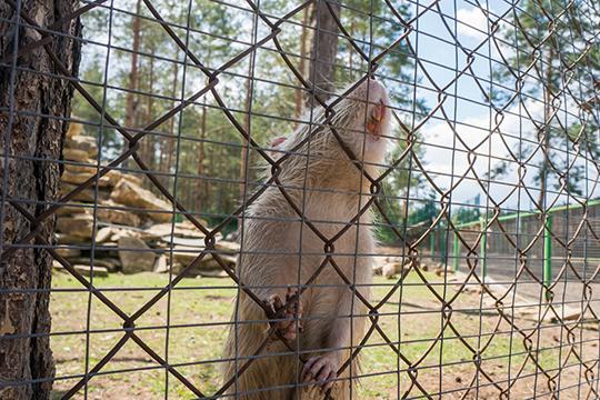 Разговоры о необходимости строить зоопарк в городе шли давно. Летом 2014 проект по созданию зверинца поддержал тогдашний мэр города Василь Шайхразиев