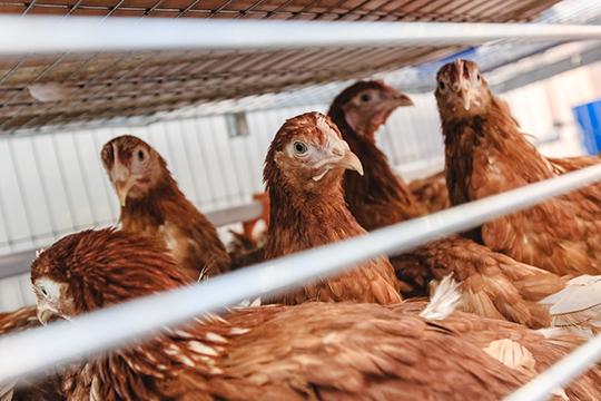 «Это наш сельский производитель. Это и большое количество птицы, соответственно, если мы говорим о Самарской области. И вводить сейчас процедуру [банкротства] везде — это будет катастрофой просто»