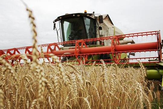 Компания с говорящим названием «Закрома» (11) сумела собрать 43,5 тыс. тонн зерна с урожайностью 31,9 ц/га. Владелец «Закромов» Сергей Билан располагает 13,7 тыс. га пашни в Новошешминском районе РТ