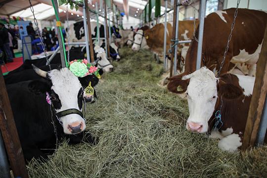 АПК «Продпрограмма» (8) входит в структуру «РМ АГРО» Рифата Мутигуллина, компания активно развивается в последние годы как производитель молока, мяса КРС, а также мясных и колбасных изделий
