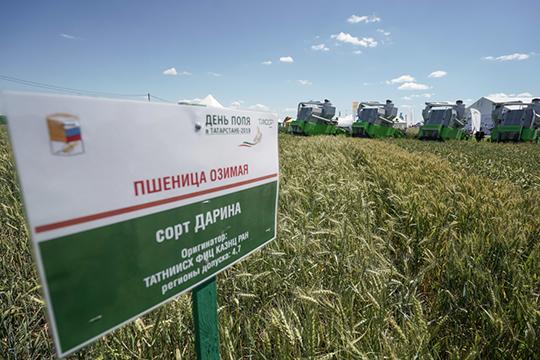 «Хорошие показатели по озимой пшенице: средняя урожайность — 52,2 ц/га, по яровому ячменю — 41 ц/га»