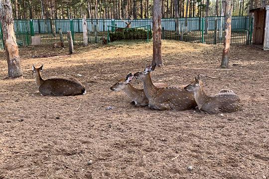 Посетителям разрешено кормить оленей ипони, гладить ихифотографироваться. Как рассказали вадминистрации, сапреля было решено отказаться отплатных услуг, так как из-за этого возникает много бюрократической работы