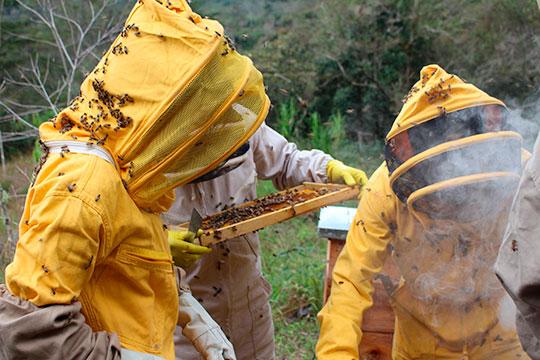 «Мне 20, но я с 6 лет занимаюсь пчеловодством, мой стаж в данном деле составляет 14 лет. В это мало кто верит»