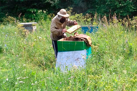 Допустим, пчела взяла мед с«отравленного» поля. Онанесразу умирает, априносит этот отравленный мед ксебе домой,вещества распространяются повсему улью, ипчела постепенно— втечение двух-трех недель— умирает