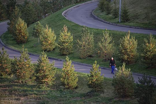 Отдельный вопрос — озеленение. Пока здесь просто высажены деревья. Однако по дендроплану предполагался и нижний уровень зелени — кустарники и растения на плодородном грунте