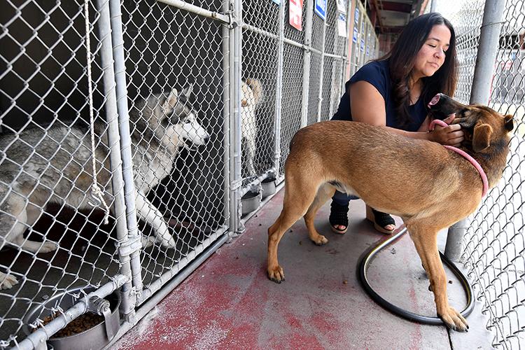 Наконец, самое масштабное позатратам: нужны приюты для пожизненного содержания собак