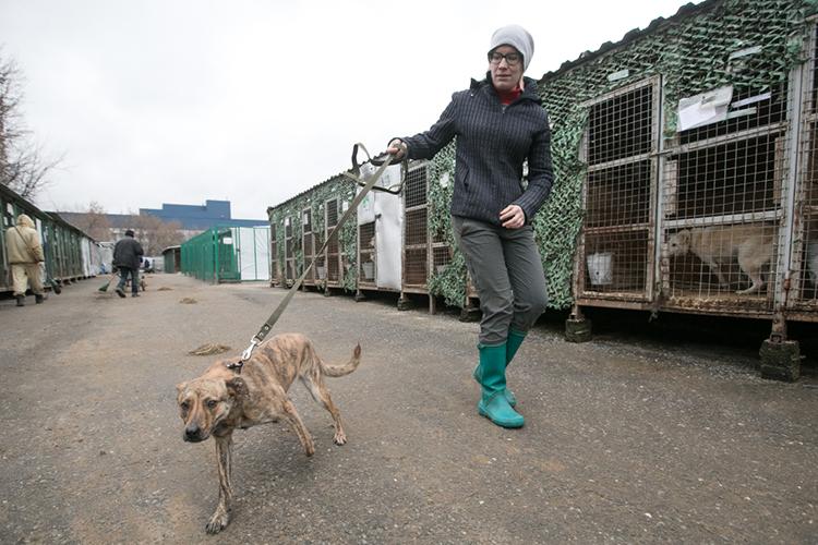 По логике вещей получается, что всех пойманных там собак везут в Казань, на улицу Новосельская, где находится временный приют на 500 голов — а потом должны отвезти обратно