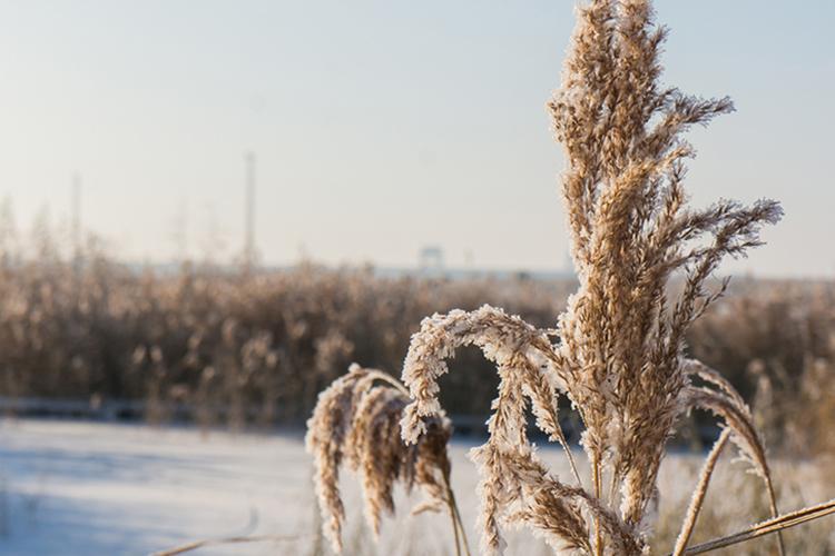 «Сейчас погоду над европейской Россией, вчастности, над Татарстаном, определяет мощный антициклон. Зимой антициклональная погода означает малооблачное небо, исильное выхолаживание, низкие температуры»