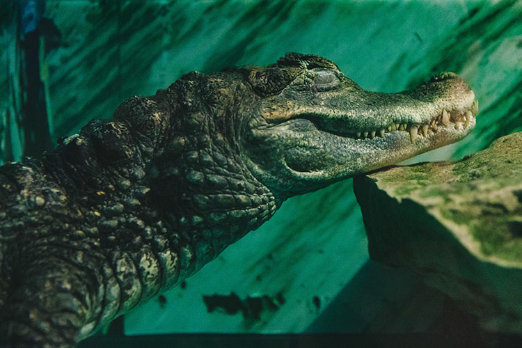 «Крокодилов и змей мы тоже не принимаем. У них могут быть какие-то болезни, о которых хозяева могут даже не знать. Наши животные находятся на территории, куда не имеют доступ другие звери, и они все привиты, мы регулярно делаем анализы»