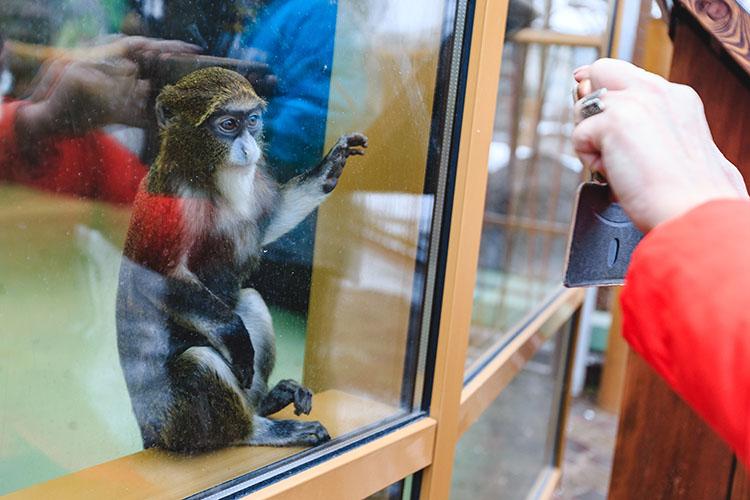 «Сегодня все зоопарки стараются делать комфортные вольеры. Порой люди начинают критиковать нас за то, что, как им кажется, вольеры тесные, что животные не так содержатся и т. д. А когда спрашиваешь их, что они знают о конкретном животном, его повадках и условиях жизни в живой природе, оказывается, что совершенно не знают ничего»