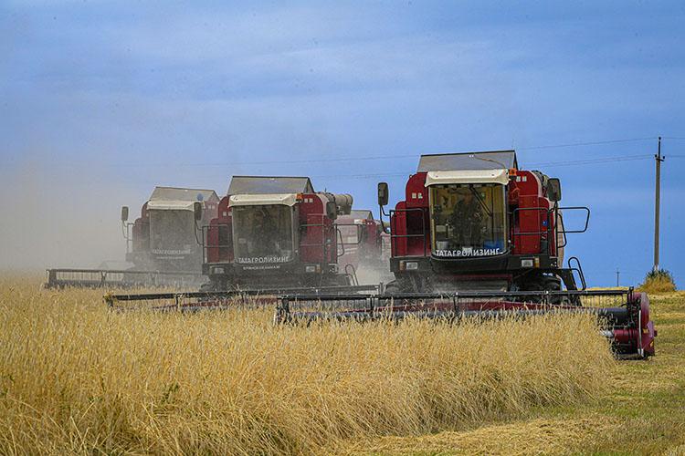 «Зерновых собрали свыше 5,5 миллиона тонн — это рекордный урожай за последние 12 лет»