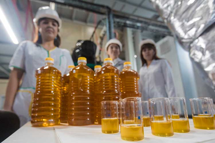 «Маслоэкстракционный завод отправляет масло в страны Европы и Азии. Они даже 100 цистерн закупили, чтобы отправлять продукцию в эти страны, потому что в пик сезона достать вагоны очень тяжело»
