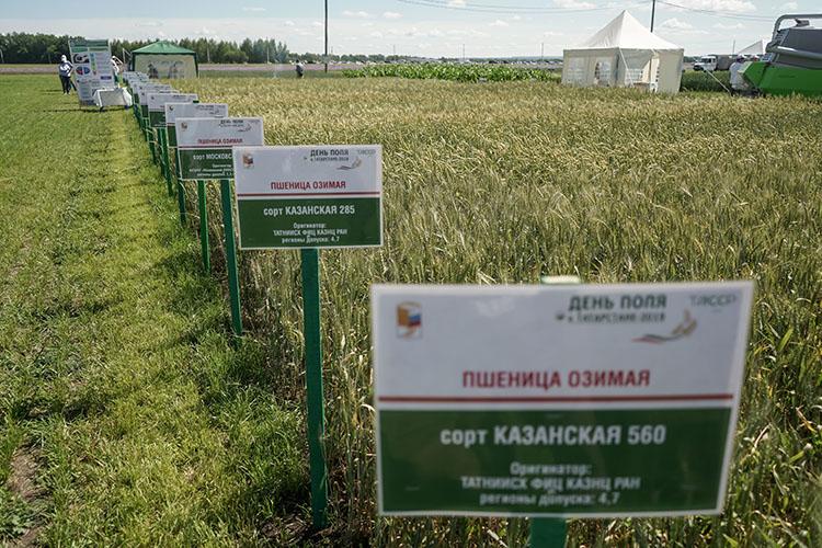 «В растениеводстве наукой занимается ТатНИИСХ, у которого есть земля в Лаишевском районе и лаборатория в Казани. Определенный рывок в растениеводстве они сделали: вывели десяток сортов зерновых культур»