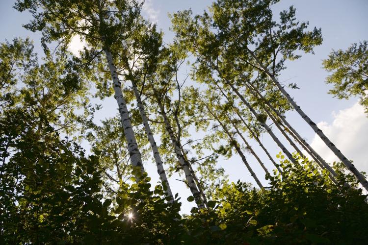 Известный факт:60,6% лесного фонда вРТ— это мягколиственные насаждения, твердолиственных насаждений только 16,6%, хвойных— 22,2%