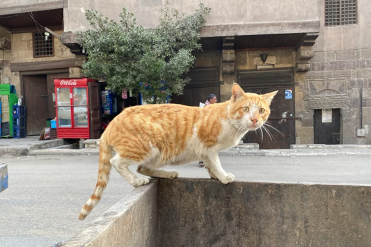 Одна рыжая кошка врайоне Замалек почти квартал бежала замной. Яхотел еенезаметно сфоткать, когда она спала, нофокус неудался. Видимо, еекрайне возмутил тот факт, что какой-то там турист незаплатил зафотосессию