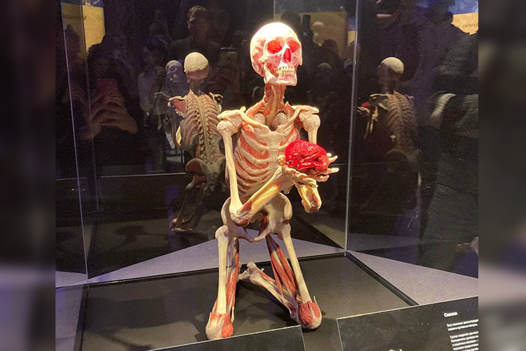 Одни экспонаты стоят под стеклом, другиеже — так иманят доних дотронуться