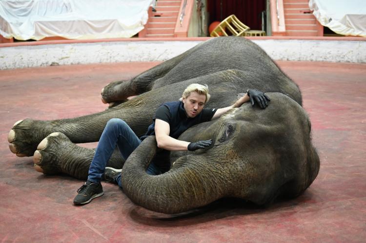 Андрей Дементьев-Корниловсчитает, что руководство Казанского цирка идрессировщик приняли правильное решение невыводить слонов наманеж: «Это минимизирует риски повторения данного конфликта»