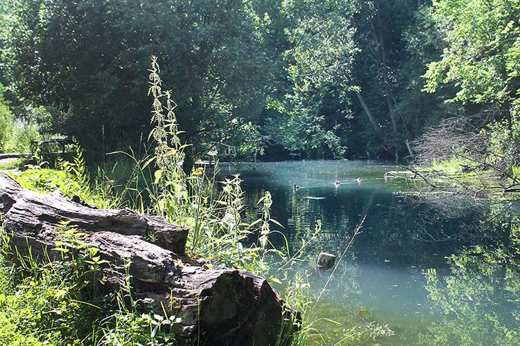 Цель— сохранить экосистему озер, избавить ееот«дикарей», которые проезжают кберегу намашинах, жгут костры иоставляют мусор
