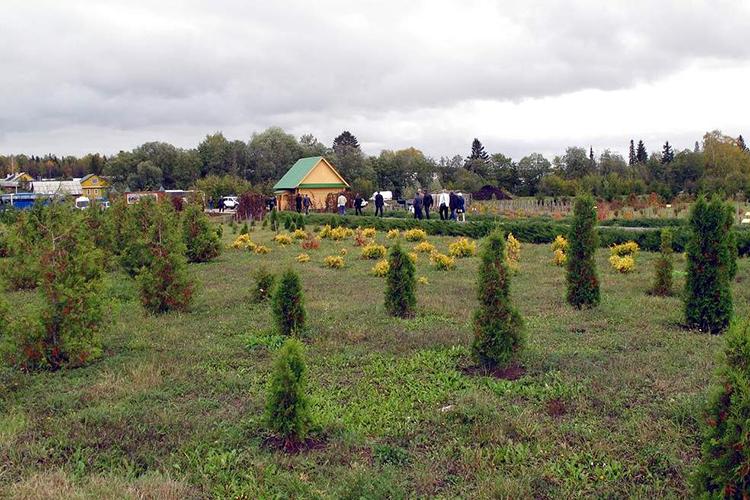 Дендрологический сад в Сабинском районеразделен натри отделения— экспозиционная группа, вересковый сад, альпийская горка. Есть тут иоранжерея на800 кв. м стропическими исубтропическими растениями, ибассейн срыбками, ипарк отдыха натерритории сада
