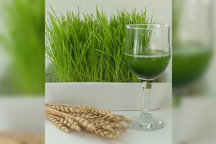 Например, одним изсамых востребованных товаров в«Бруснике» является суперфуд сок ростков пшеницы «Витграсс»