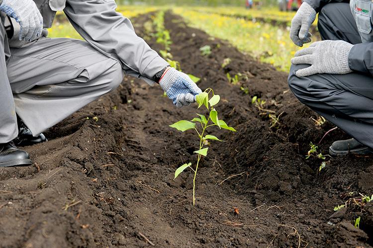 «Татнефть» весной 2021 года уже высадила более 3млн деревьев, акконцу года усилиями нефтяников эта цифра достигнет рекордного показателя в5миллионов