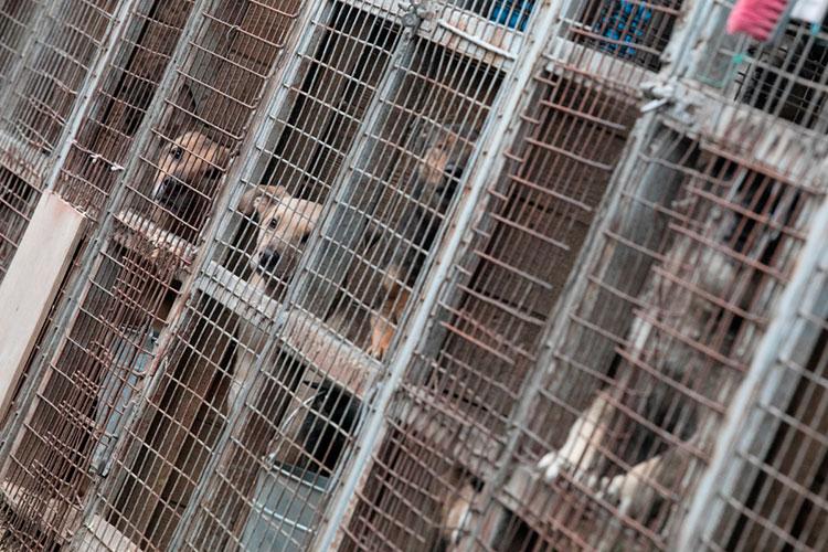 За 2 года официально было отловлено 378 собак, а официально оставлено в приюте на доживание 25 животных. В реальности же отловлено было 437, а в приюте было оставлено 137 собак