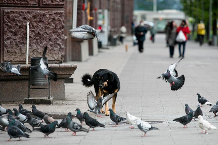 Проблема бездомных животных, которую на субботнем совещании президент Татарстана назвал для республики позорной, получила сегодня свое продолжение