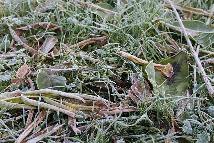 Сегодня ночью вовсех районах РТнапочве ожидаются заморозки до-1 градуса. Холоднее всего ночью будет вЗакамье инаюго-востоке