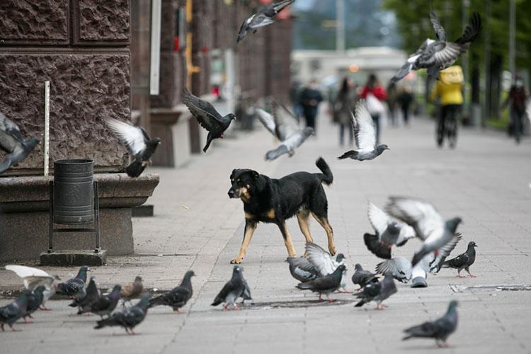 На благотворительной ярмарке «Дай лапу» кинологи изоопсихологи рассказали казанцам отом, как вести себя суличными собаками ивоспитывать домашних животных. Собранные пожертвования передали приютам для животных