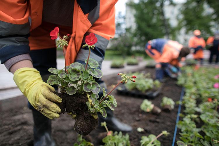 В2020 году из-за «коронакризиса» встолице РТчисло цветников сократили, новэтом году увеличили на30%— цветы высадят после 20мая