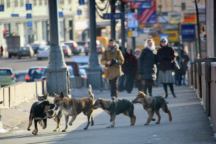 «Особо остро встал вопрос увеличения количества безнадзорных животных как вТатарстане, так ивцелом вРоссии. Люди жалуются наагрессивное поведение собак, которые сбиваются встаи истановятся настоящей угрозой для населения»
