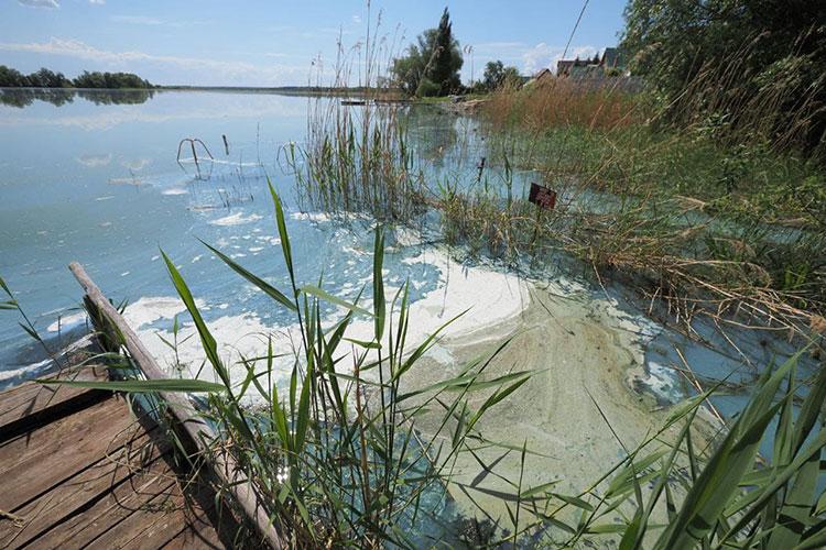Экологическое бедствиесегодня разразилось вАрхиерейскомозеревблизи селаТарлаши Лаишевского района