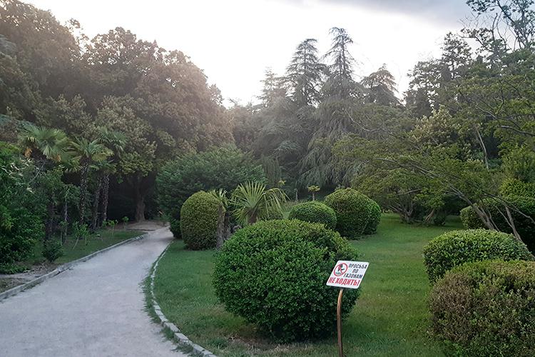 Массандровский парк оказался очень даже красив иухожен. Там судовольствием можно прогуляться поаллее роз ибамбуковой аллее, увидеть секвойи, гигантские кедры имного такой растительности, которую невстретишь внашей полосе